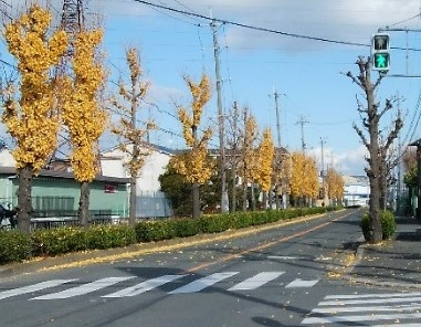 無色の並木道