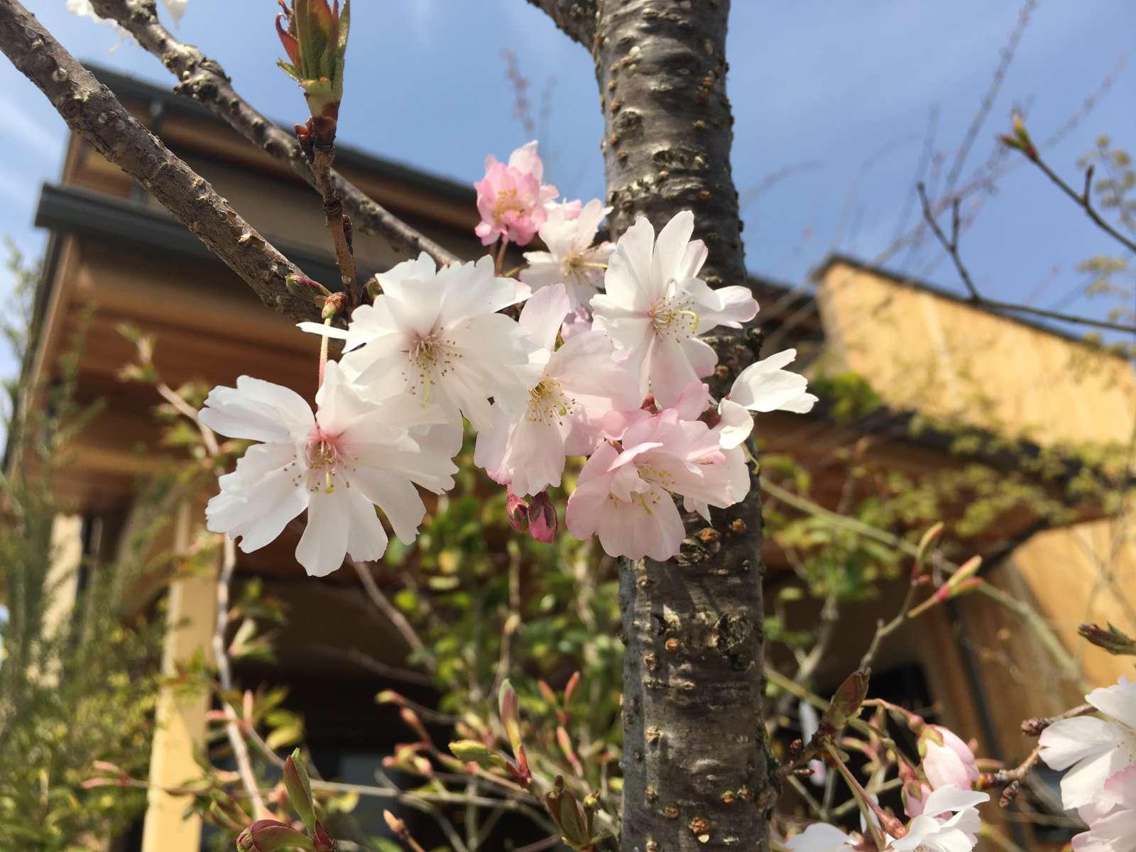 今日の春日元町🌸