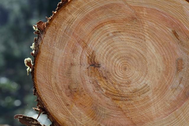 【アンケート】根強い人気を誇る木造ハウス、その理由に迫る!