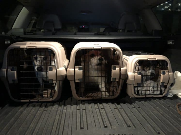 犬たちの通勤スタイル