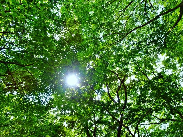 国産木材が森を守る?